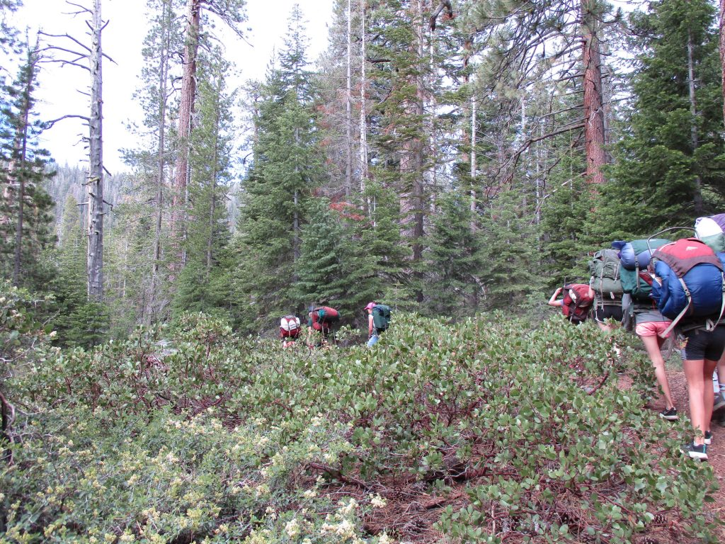 Campers at Gold Arrow Camp walk through manzanita and pine forest.